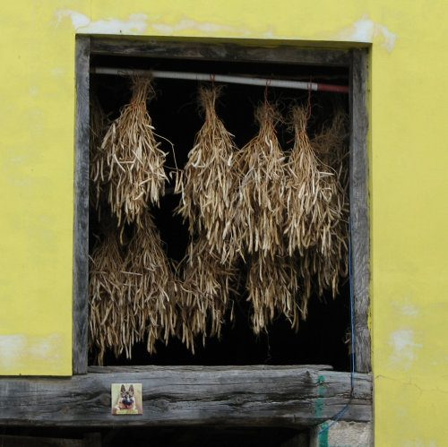 Asturias, Spain. Beans hanging to dry in a window